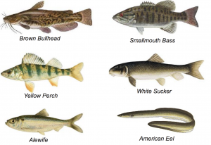 Fish Species in LHP and GHP